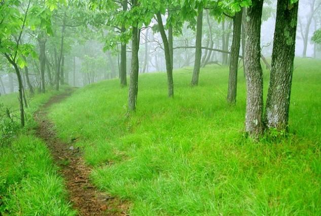 Higby Forest Glade