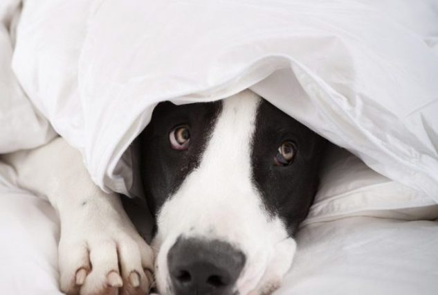 The Best Care For Down Comforters